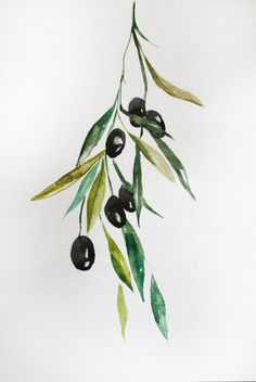 Original Watercolor Painting Black Olives Organic Vegetables olives on branch…