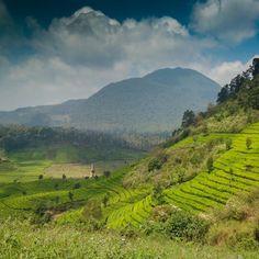 G Patuha  #imosa.id #tropicalwilderness #gunungindonesia #gunungbandung #getoutside #gooutside #fotografialambebas #wildernessphotography #natgeoindonesia #HujanRimbaMutiara
