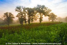 Sunrise on the Oaks  - #inspiration
