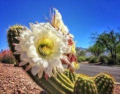 Springtime in Tucson, Arizona | Gotta Love It! | Photo via Instagram by @azstephen