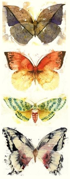 ARTFINDER: Butterflies and Moths by Kate Osborne - I did a series of these Butterflies and Moths, starting with indirect watercolour techniques, and then working back into the images. Again they were inspired...