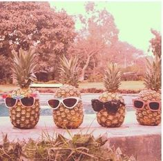 "those pineapples are so ""cool""."