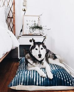 Durable African mud cloths work for so many things...even dog or cat pillows for your wonderful furry friends! Get the mud cloth fabric you love at MIX!: https://www.mixfurniture.com/furniture/indigo-mali-mudcloth-5770?fromcat=50006&fromsubcat=1006