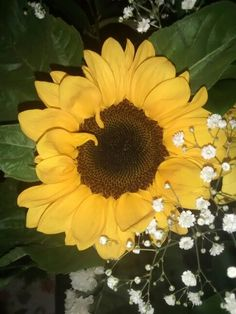Sunflower :)