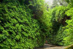 redwood81.jpg (800×533)