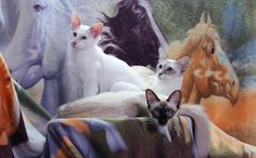 This is my picture favorite! LIO, STELLA and DIVA