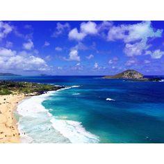 通は知ってる♡ハワイ旅行を200%楽しむカギはワイキキトロリー! - Locari(ロカリ)