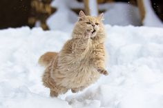 I'll catch the snow!