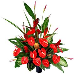 PARADISE FLOWERS  Stunning red anthuriums brought out in contrast with tropical leaves.  It is a stunner!!   This product delivers only in MUMBAI VASHI THANE