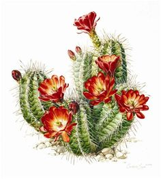 Botanical illustration - Pflanzen - plant - usine
