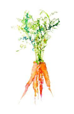 watercolor-food-veggie-carrot-illustration-marta-spendowska-client-holli-thompson
