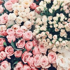 all the roses