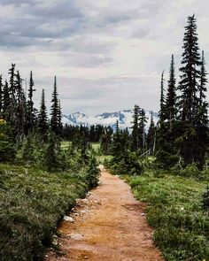 Trail (Garibaldi Provincial Park, BC) by man-and-camera cr.c.
