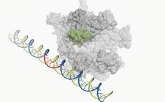 A hidden movement in the molecule that makes RNA
