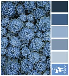 Blue sedum - Navy, Blue, Grey, Slate, Pastel - Designcat Colour Inspiration Pallet