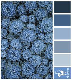 Blue sedum - Navy, Blue, Grey, Slate, Pastel  - Designcat Colour Inspiration Pallet