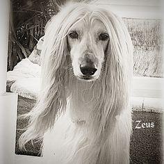 Príncipe Zeus