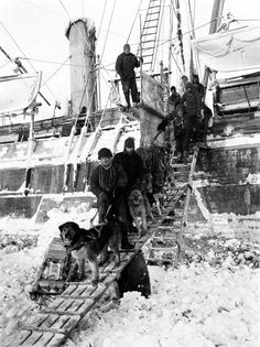 Taking dogs off Endurance.  Fantastic photos from the Shackleton Antarctic expedition.  The expedition ship Endurance sank 100 years ago today.