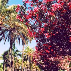 THE FRENCH RIVIERA, CANNES photo diary beach ocean palm trees http://mariannelle.com