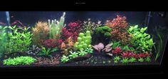 A 75 Gallon Journey -> - The Planted Tank Forum