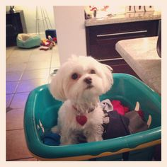 I can help with the laundry!