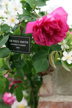 The Chelsea Flower Show Sir Paul, Chelsea Flower Show, Climber, Paul Smith, Flourish, Beautiful Images, Garden Plants, Planting, Bouquets