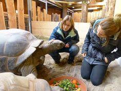 Ein Tag bei den Tieren - das etwas andere Zooerlebnis | Zoo Heidelberg  Ein Tag bei den Tieren - das etwas andere Zooerlebnis