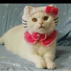 Hello kitty kitty? Lol