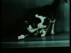 """LSD Confused Cat from """"Research and Development Progress Report No 2"""" 1960 US Army https://www.youtube.com/watch?v=MxikFRQ4iKQ #cats #LSD #USArmy"""