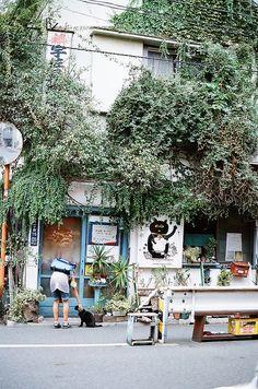 eh bah nous aussi, on a un p'tit chat noir e, (c'est encore un mâle devenu… Japon Tokyo, Japan Street, Japanese Streets, Cafe Shop, Maneki Neko, Nagoya, Nihon, Store Fronts, Japanese Culture
