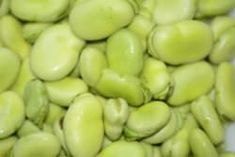 Recipe for Greek Style Fava Bean Salad Healthy Greek Recipes, Italian Recipes, Italian Foods, Three Bean Salad, Bean Salad Recipes, Greek Dishes, Fava Beans, Nutrition, Fruit And Veg