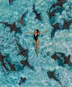 Swimming with sharks in the Bahamas would you dare? Tag the person you would do this with. Photo by. Underwater Photography, Nature Photography, Travel Photography, Vacation Places, Dream Vacations, Honeymoon Destinations, Italy Vacation, Nurse Shark, Summer Vibe