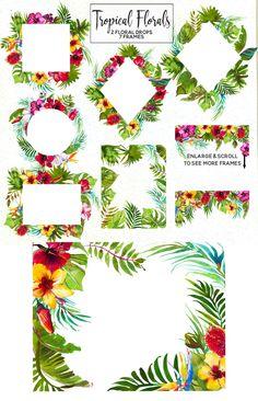 Tropical Flowers Watercolor Clipart Tropics Australian Florals