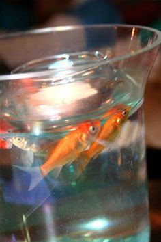 My wedding colors were orange and turquoise, so we used blue pebbles at the bottom of the bowls and live gold fish with a floating candle as center peices at the reception.