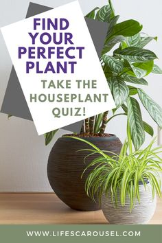 Not sure which type of houseplant to get? Take this houseplant quiz to find your PERFECT match! Answer these easy questions to find the right plant for you! Colorful Plants, Green Plants, Home Design, Growing Vegetables Indoors, Indoor Plants, Indoor Gardening, Potted Plants, Types Of Houseplants, Easy Plants To Grow