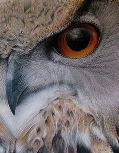 Great close up shot