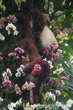 Kew Orchid Extravaganza 2017 - Pumpkin Beth Growing Plants, Cut Flowers, Different Shapes, Botanical Gardens, Planting, Floral Arrangements, Sculptures, Vibrant, Pumpkin