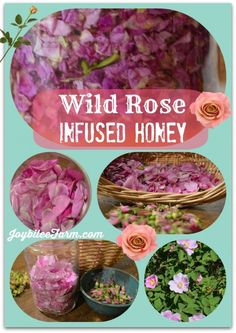 Wild rose infused honey made with foraged petals that are rich in rose scent.