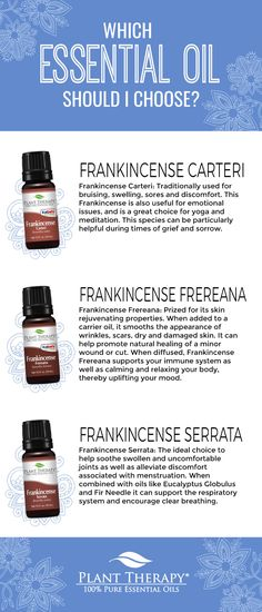 One of the first things to come to mind when we hear Frankincense Essential Oil is Christmas and the holiday season. Plant Therapy offers three different varieties. There are many things these oils have in common, not to mention a few things that set them Plant Therapy Essential Oils, Essential Oils For Pain, Essential Oil Blends, Edens Garden Essential Oils, Aura Cacia Essential Oils, Frankincense Essential Oil Uses, Essential Oil Diffuser, Frankincense Oil, Natural Cleaning Products