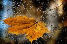 Осенний лист клена