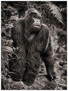Nick Brandt Creative Nature Photography Animals Wildlife