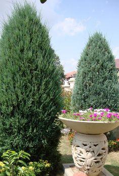 Diseno De Jardines Ideas De Jardines Decoracion De Jardines Flores