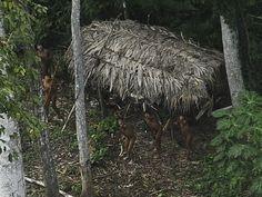 Índios considerados sem contato por antropólogos apontam para avião em região do Acre (Foto: Lunae Parracho/Reuters)