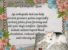 Nokee's Arthritis Tip #31- Orthopedic Beds An orthopedic bed can help prevent pressure points (especially on bony joints) from forming and aid your dog's comfort. Benefits include uninterrupted blood circulation, reduced stiffness, and relaxing sleep.  #caninearthritis #dogs #arthritis #pets #caninehealth #arthritisindogs #pethealth #OrthopedicBeds