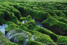 2_9861-老梅石槽-海草-海藻-青苔-石蓴-岩岸-礁岩-北海岸-台北縣-石門鄉 North Coast, Seaweed, Taipei County,Taiwan by 棟樑‧Harry‧黃基峰‧Taiwan, via Flickr
