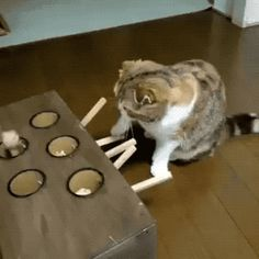Cat GIF Central — Gonna get him. he's all mine. Animals And Pets, Baby Animals, Funny Animals, Cute Animals, Crazy Cat Lady, Crazy Cats, Cute Cats, Funny Cats, Funny Jokes
