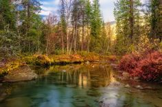 В осеннем лесу...Хибины. Сентябрь 2015 г.