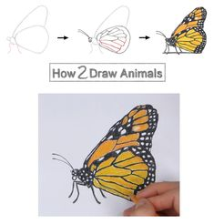 butterfly draw monarch drawing step side how2drawanimals learn easy butterflies drawings beginners painting paint flowers instructions tattoo rock dragon board
