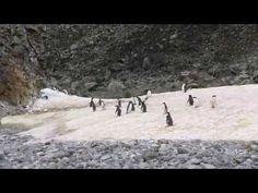 Kurz-Video von unserer Antarktis-Reise (auf Photo Blog Suitbert Monz)