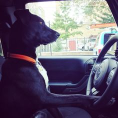 Vehicle Temperature Monitors for Precious Pets
